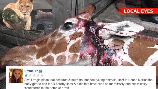 zoo rødovre Esbjerg thai massage