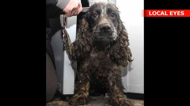 dyrenes beskyttelse hunde