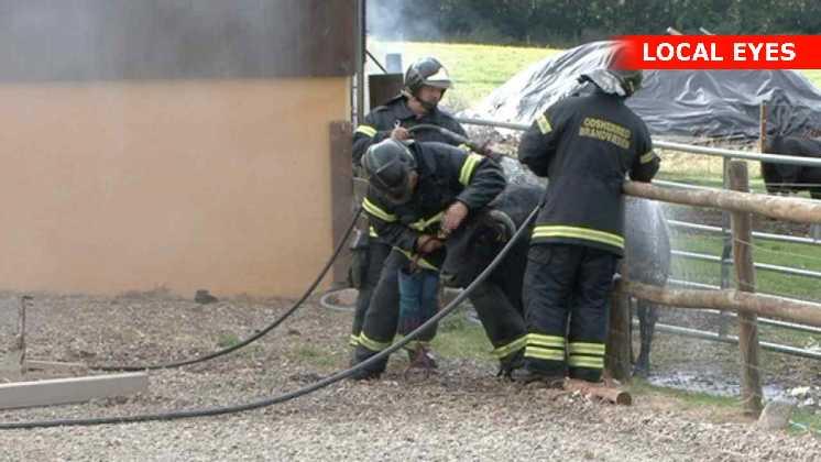 Brandmænd køler en forbrændt tyr