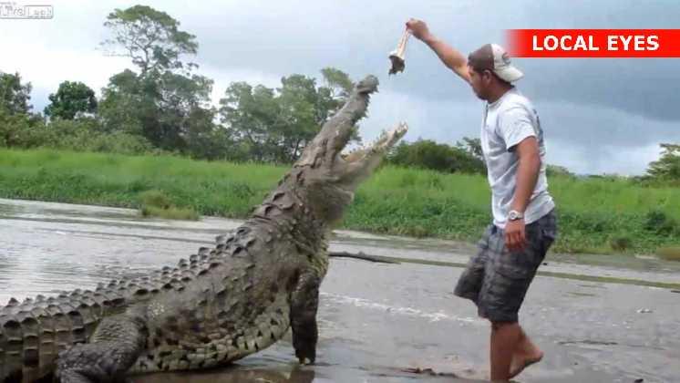 Smart turistguide driller en stor krokodille