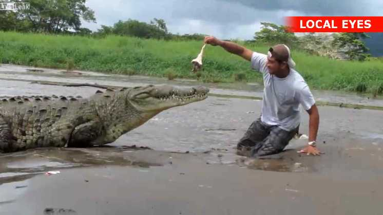 Heldigvis var krokodillen mere interesseret i lokkemaden