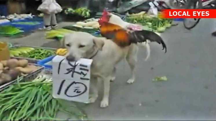 Hunden står tålmodig og trækker kunder til boden