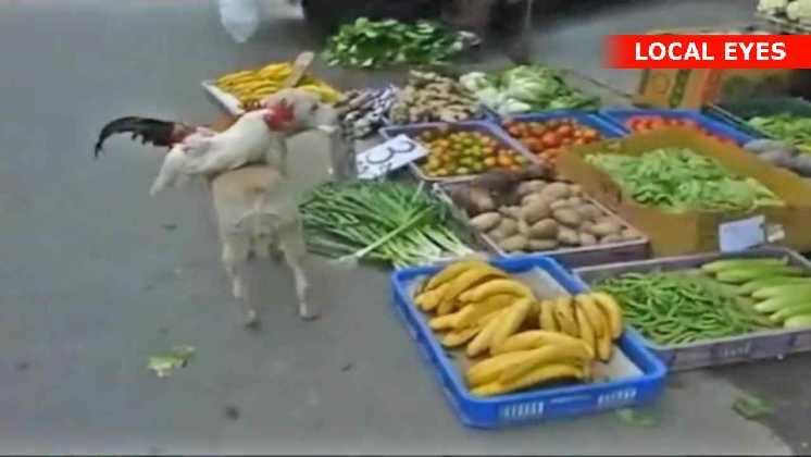 Grønthandlers hund på arbejde